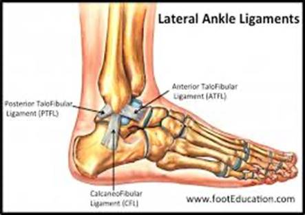 lateral ankle ligaments diagram